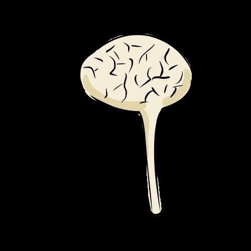 脳の無料イラスト素材