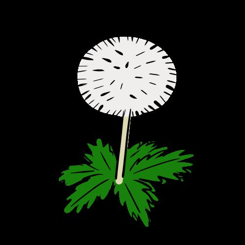 タンポポの綿毛の絵のフリー素材