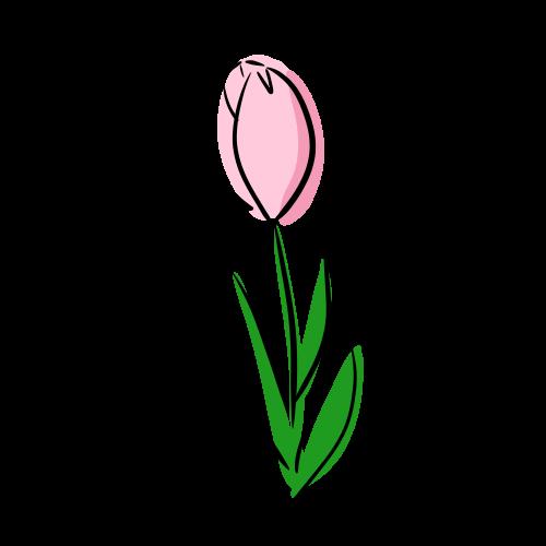 チューリップの絵のフリー素材