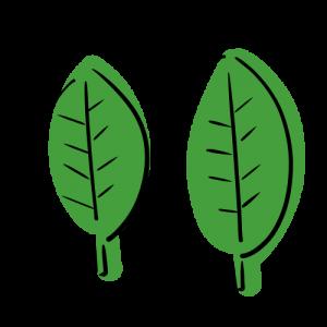 二枚の葉の無料イラスト素材